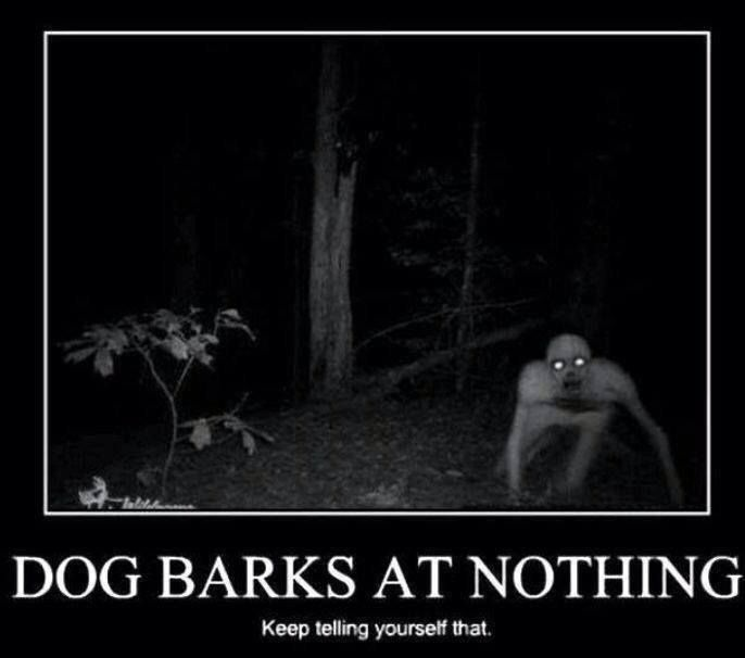 dog barks at nothing keep telling yourself that lol love dogs