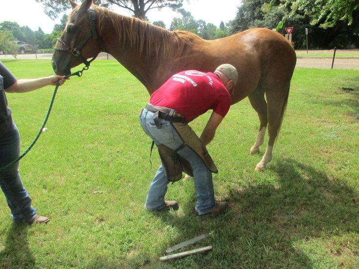 Horseshoeing demonstration