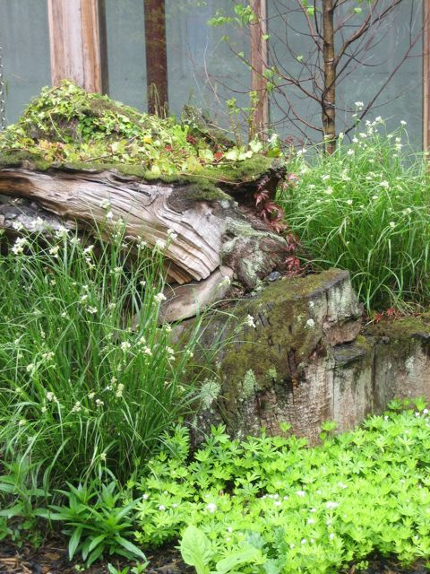 Rotting log and wild, woodland planting in Dublin city centre community centre: http://www.howbertandmays.ie/sean-o%27casey-community-centre-dublin-gardens