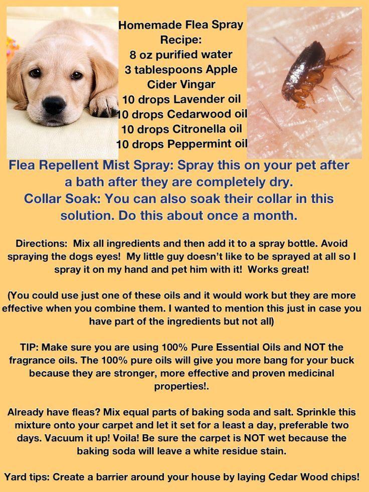 The 25 Best Flea Repellant Ideas On Pinterest Natural Flea Remedies Dog Flea Remedies And Essential Oils Dogs Dog Flea Remedies Flea Repellent