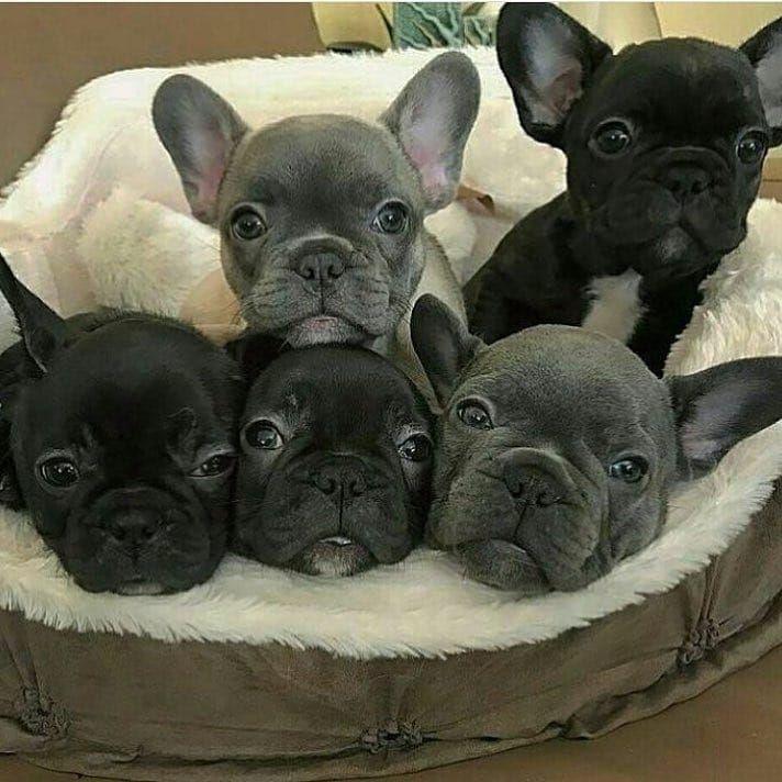 81 Likes 4 Comments Dogs Of Ottawa Dogsofott On Instagram