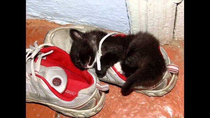 venta de zapatillas por internet