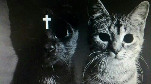 Demon satanic cats? | crazy cat lady | Pinterest | Cats ...