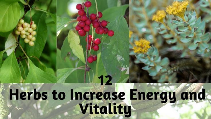 Constantly Tired Here are 12 Herbs to Increase Energy and Vitality