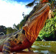Bundaberg, Australia - Lonely Planet