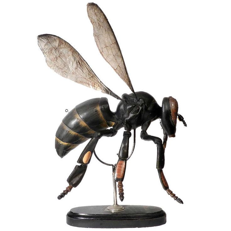 Large Early Anatomical Model Of A Bee, 1920's| From a unique collection of antique and modern models and miniatures at http://www.1stdibs.com/furniture/more-furniture-collectibles/models-miniatures/