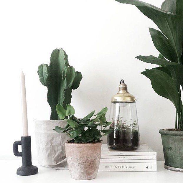 Mooi: Planten groeperen, Spruitje lamp, plant hemionitis arifolia (hartjesvaren) [styling & fotografie door @milou_nieuwenhuis]
