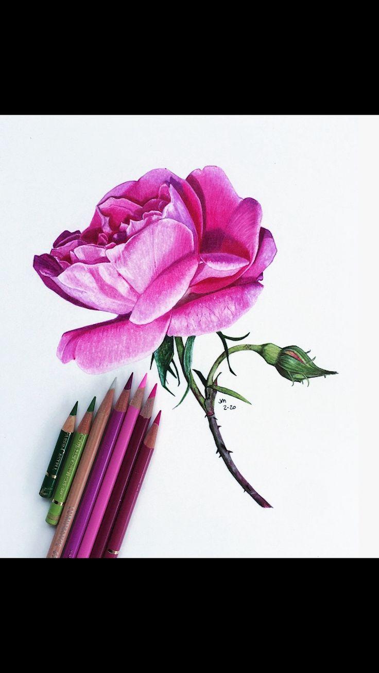 Jennifer Morrison Art is creating Botanical Colored Pencil ...