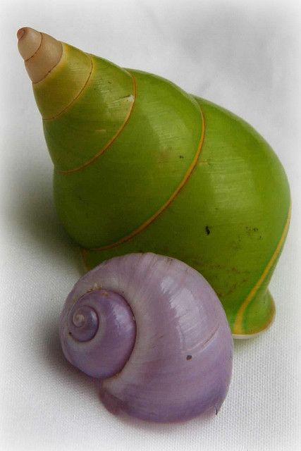 purple & green shellsSnails, Sea Shells, Art Nouveau, Lavender Soap, Green Shells, Colors, Happy Heart, Purple Bedrooms, Sell Seashells