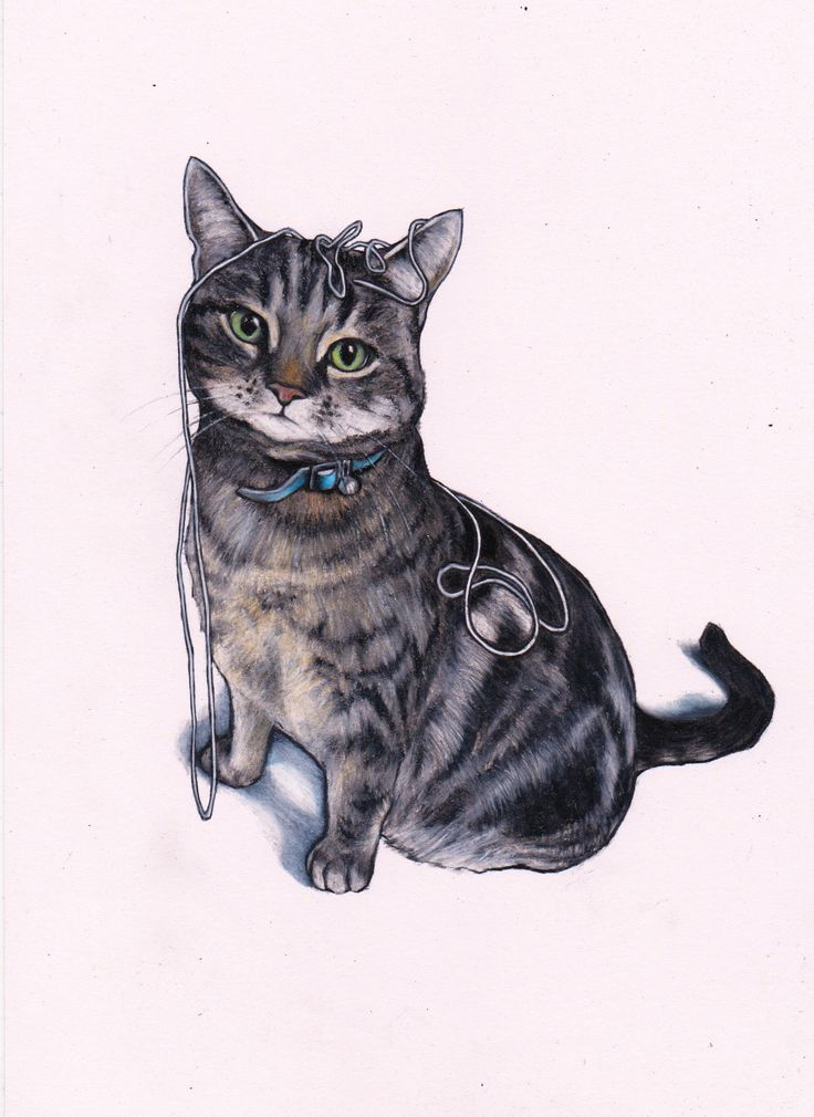 Custom cat art by Jim Griffiths. Mogwai the cat. Colour pencil on white paper... https://www.etsy.com/listing/253017060/cat-art-custom-drawing-commission-a-cat?ref=listing-shop-header-0 #Cat #CatArt #ColourPencilArt