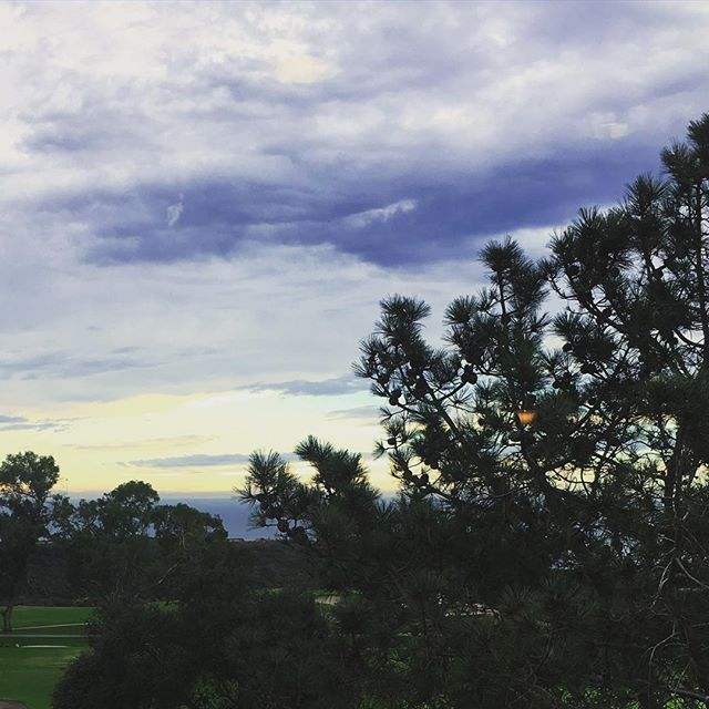 Rare rain clouds over a rare Torrey Pine tree on our CA campus #sandiego #lajolla #researchlife #lajollalocals #sandiegoconnection #sdlocals - posted by The Scripps Research Institute  https://www.instagram.com/scrippsresearch. See more post on La Jolla at http://LaJollaLocals.com