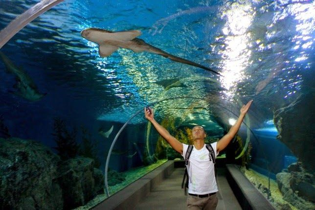 Siam Ocean World - Bangkok  read more @ http://www.worldatglance.com/2014/12/7-must-visit-places-of-bangkok.html