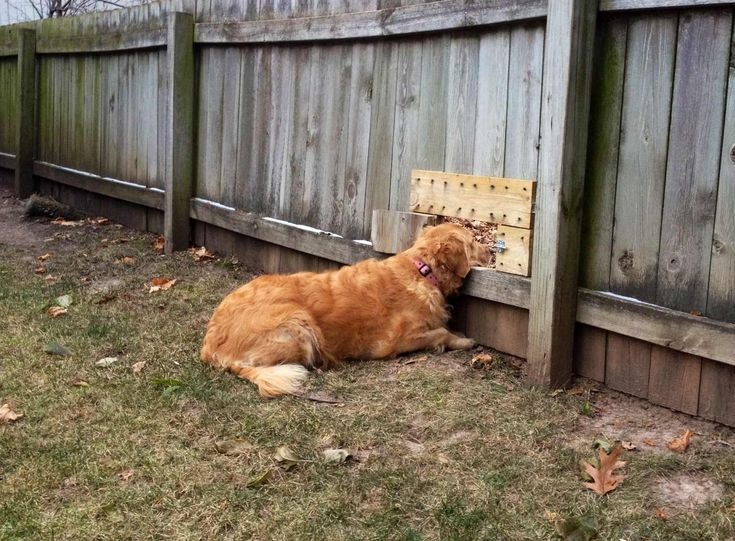 20 Dogs Not Letting A Silly Thing Like A Fence Get In The Way Of True Love