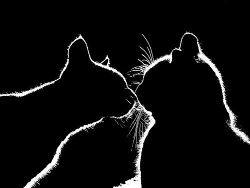 kitty silhouettePhotos, Kitty Cat, Meow, Pets, Silhouettes, Black, Animal, Greater Gift, Cat Lady