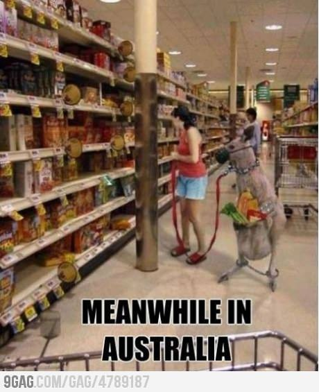 I cannot express to you how much I want to go grocery shopping with a kangaroo now. @Rian Bessinger
