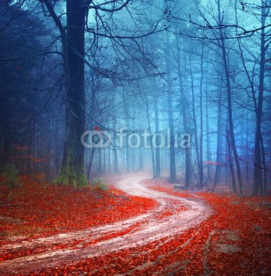 Magic forest road ©robsonphoto
