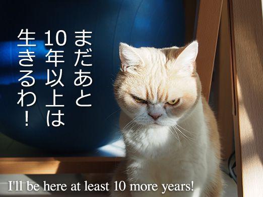 2016年、新年小雪 New Year's Koyuki 2016「小雪の怒ってなどいない!!」