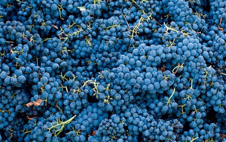 #Sangiovese #grape... Good and beautiful!