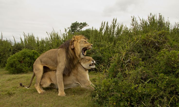 .....and action - Addo nature reserve, South Africa