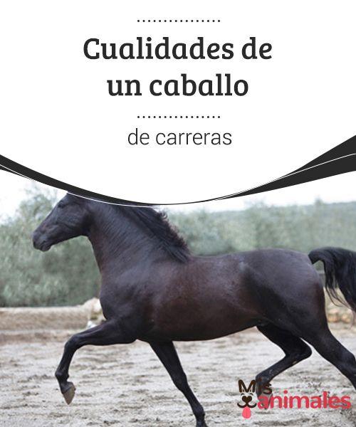 Cualidades de un #caballo de carreras  Aunque todas las razas #equinas que participan en #carreras sean pura sangre, esta #raza ganó su nombre gracias a la excelencia de sus calidades