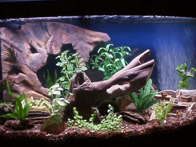 Diy fake rock aquarium background aquarium decoration for Aquarium decoration diy