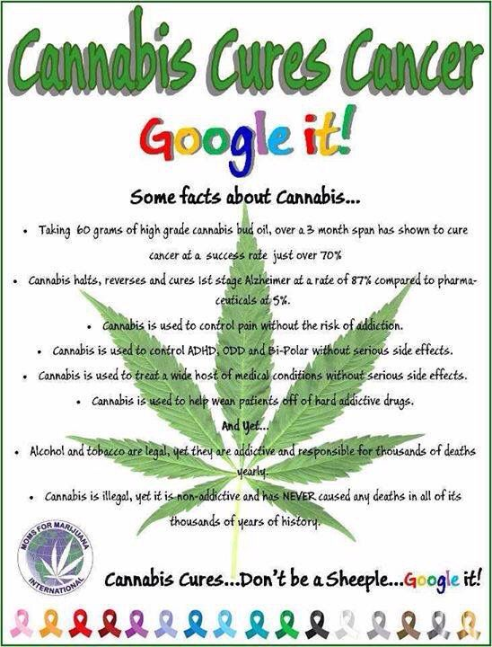 Cannabis Cures Facts Medical Marijuana Pinterest