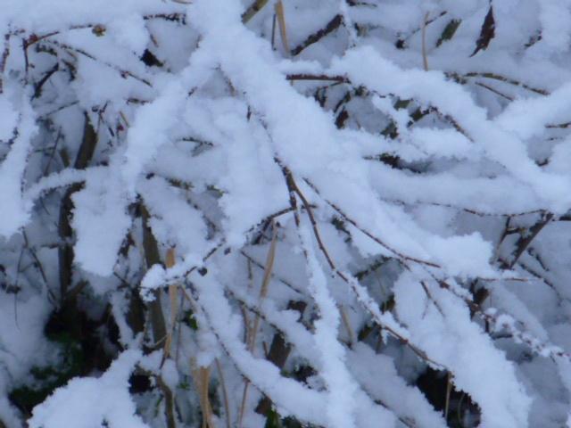 branche neige