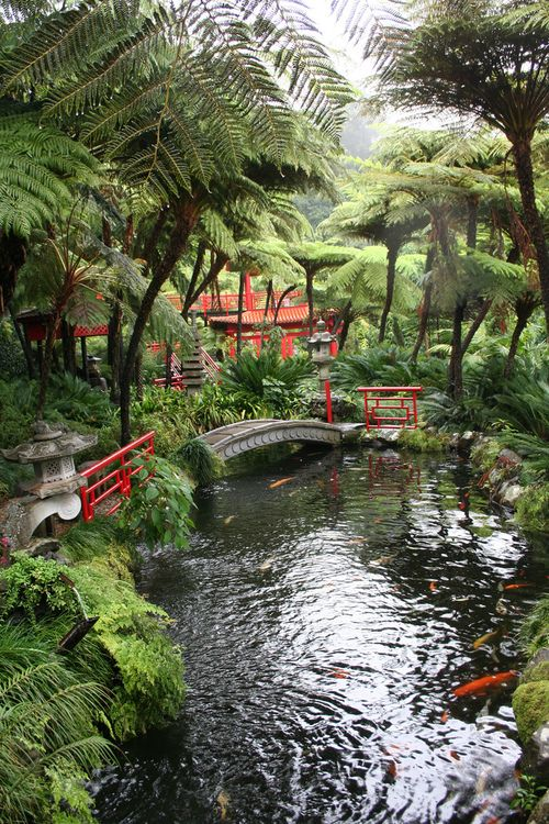 49 best images about my dream garden on pinterest for Japanese garden san jose koi fish
