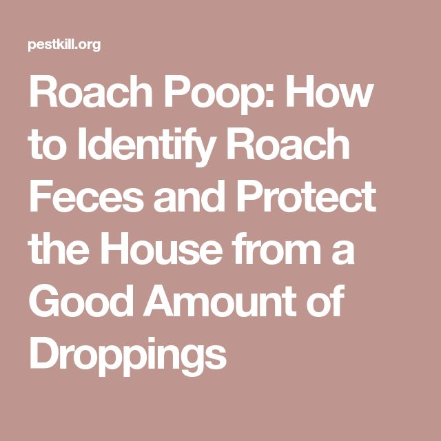 Roach Poop: How to Identify Roach Feces and Protect the House from a Good Amount of Droppings