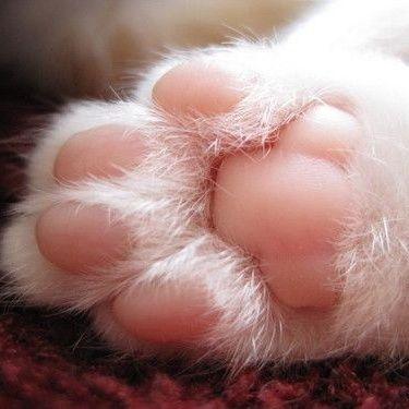 Cat's paw pad / Animals