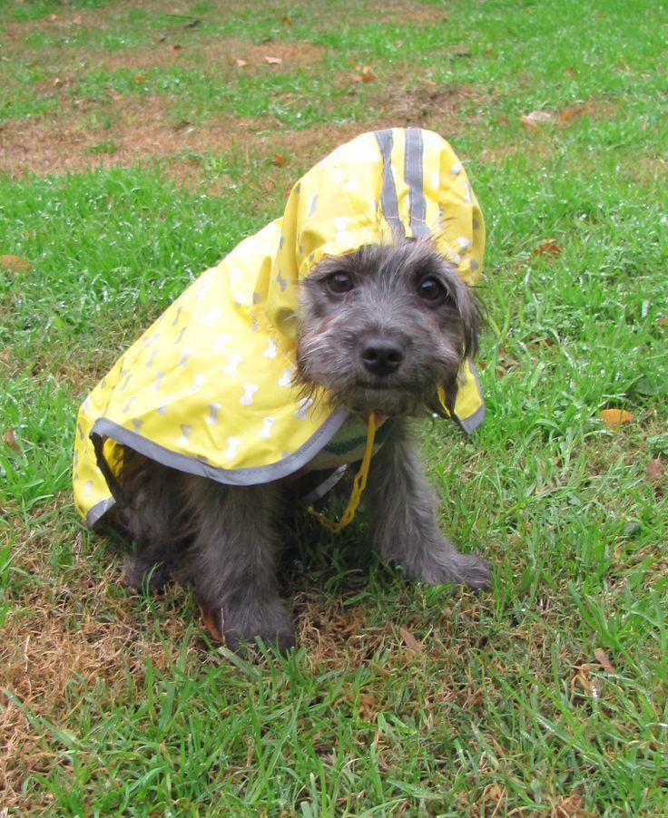 Ready to rain ❤️❤️❤️ Yellow coat! http://www.zazzle.com/vickybonifacio