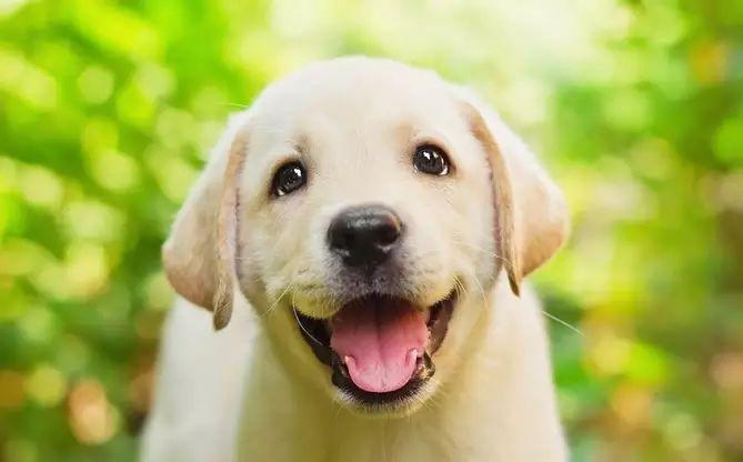 10-clases-de-perros-perfectos-para-una-familia-con-ninos