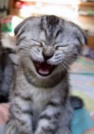 39 best The Laughing Cat images on Pinterest Kitty cats