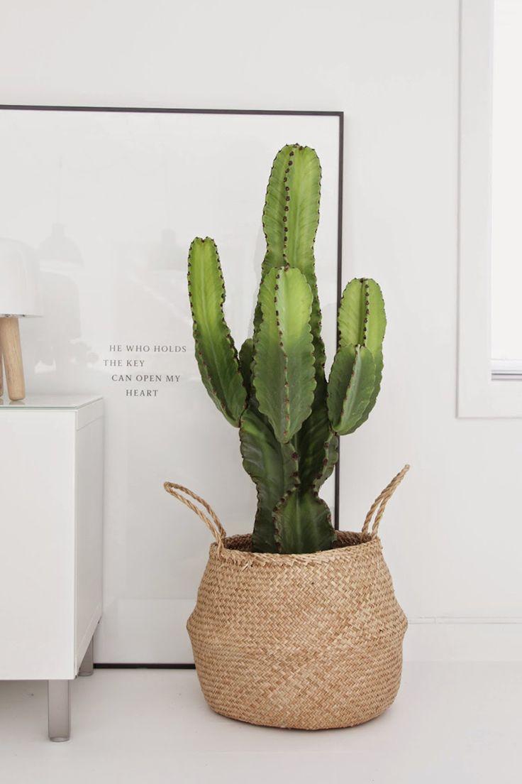 Cactus grandes en decoración. Macetas de mimbre. R DISEÑO INTERIORISMO Y DECORACIÓN MADRID