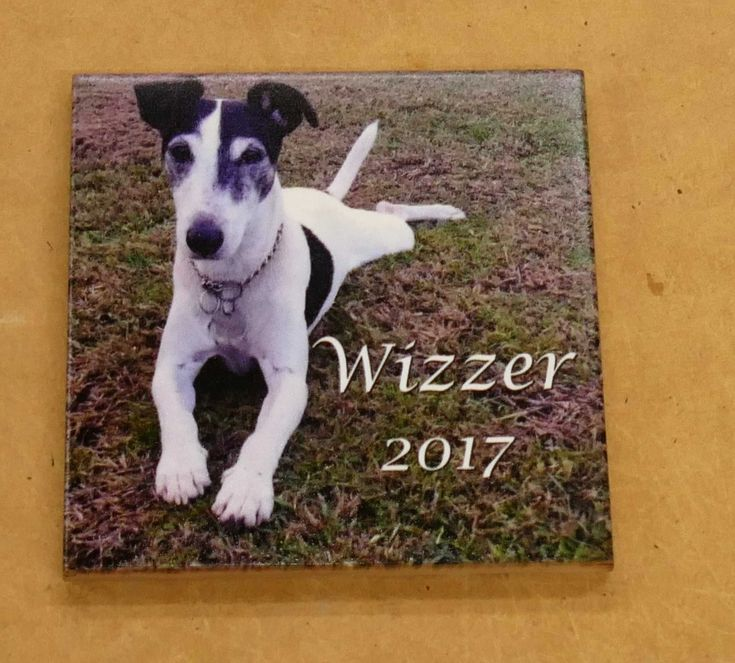 Pet memorial tile custom printed for use outdoors. Upload your photo and instructions with your order