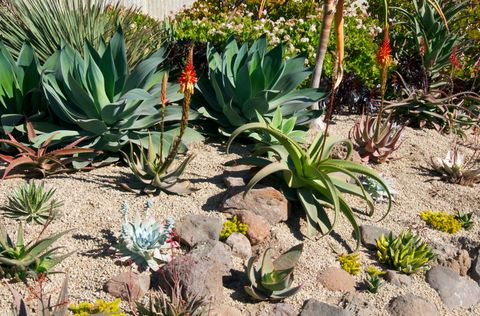 17 Best images about Drought tolerant low H2O