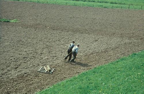 4488 Komgronden, 1961 Beschrijving: Een eg getrokken door vader en zoon; het probleem van de kleine boer. 11-4-1961 Auteursrechthebbende: Gelders Archief