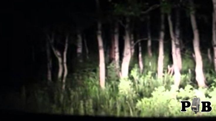[Video] Sundance, Utah. A couple driving through the dark woods spotted something bizarre just a few feet from the road. They manage to turn back around and capture something strange via a cellphone or camcorder.