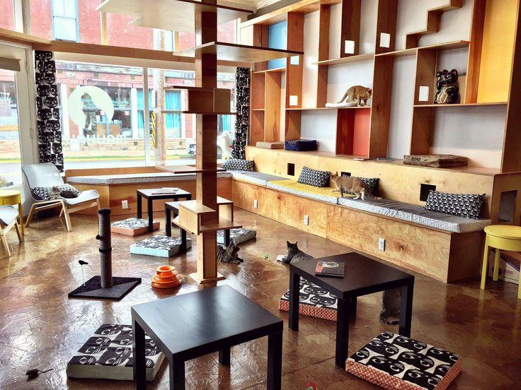 Mauhaus Cat Cafe Maplewood MO