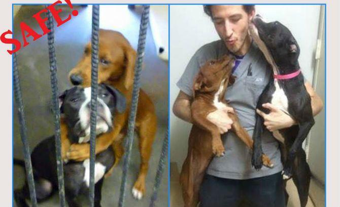 http://www.jeanmarcmorandini.com/article-340294-l-incroyable-photo-de-deux-chiens-abandonnes-et-condamnes-a-l-euthanasie-le-jour-meme-qui-bouleverse-les-etats-unis.html