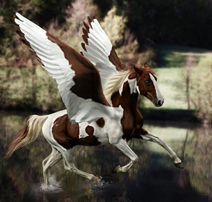 42 best images about Unicorns and Flying Horses on ...