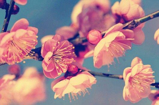Vintage blossom :3