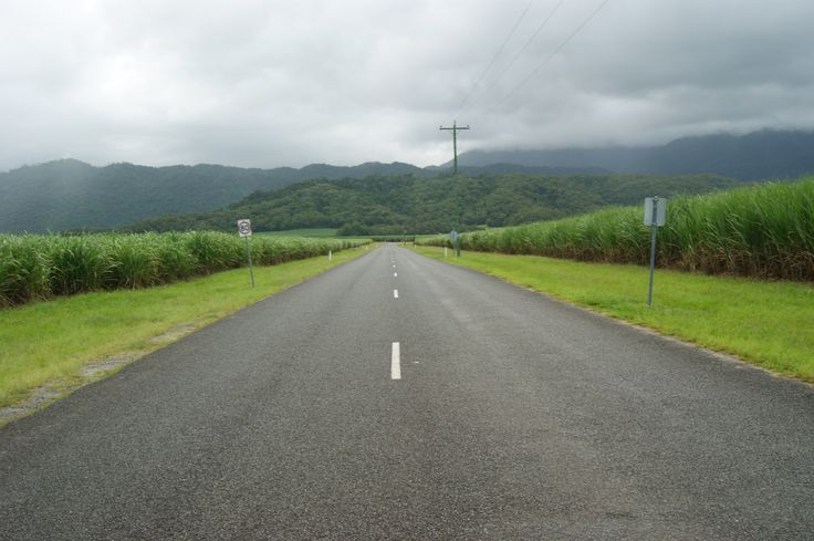 Cane fields of FNQ
