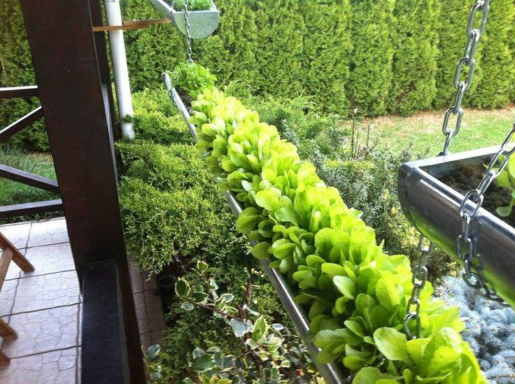 Grow Salad In Guttering!