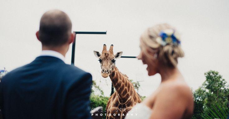 Taronga Wedding Centre Wedding - giraffe