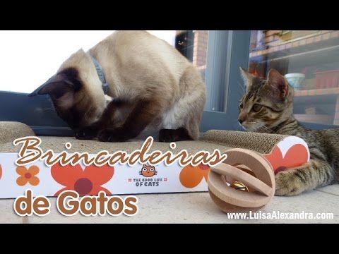 Brincadeiras de Gatos – Luísa Alexandra