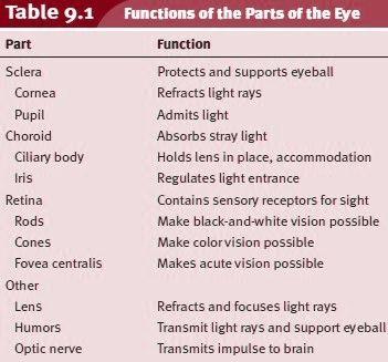 Best 20+ Function Of The Eye ideas on Pinterest   Office standard ...