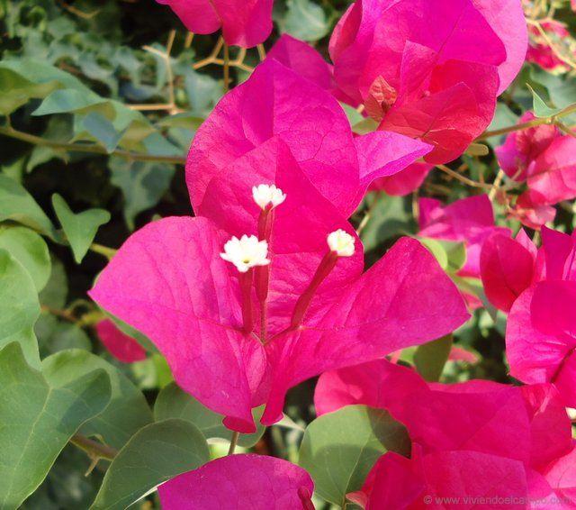 Mejores 34 im genes de arbustos para jardin en pinterest for Arbustos decorativos