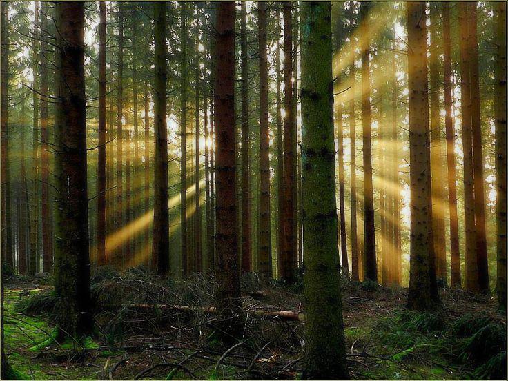 imagens com luz do sol nascendo ou se pondo atras de arvores - Pesquisa Google