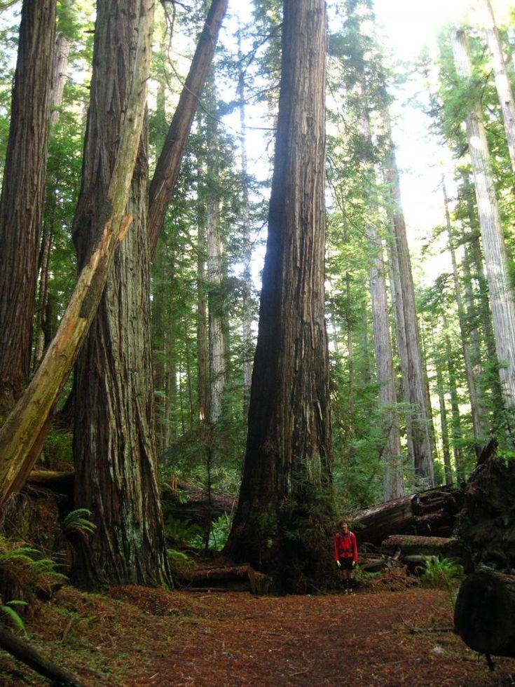 17 best redwood coast events images on pinterest coast seaside